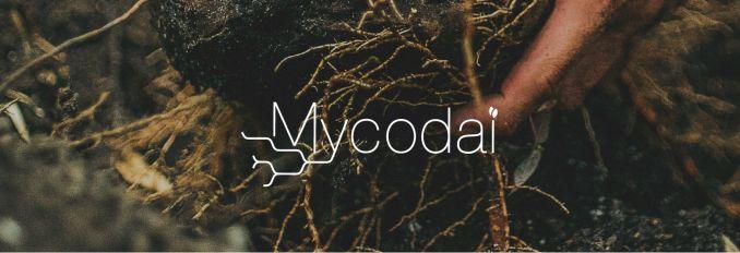 Mikoriza Mycodai Idai Nature
