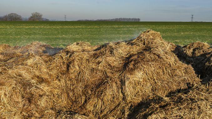 Stajski gnoj goveda