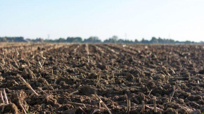 tlo i mikoriza