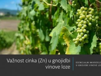Vaznost cinka u gnojidbi vinove loze