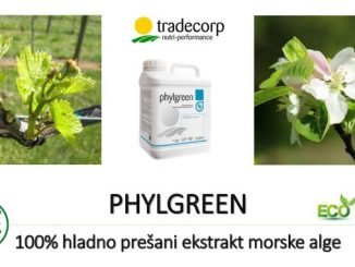 Biostimulator Phylgreen