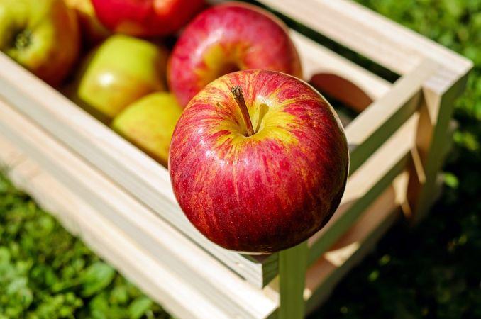 gnojidba jabuke